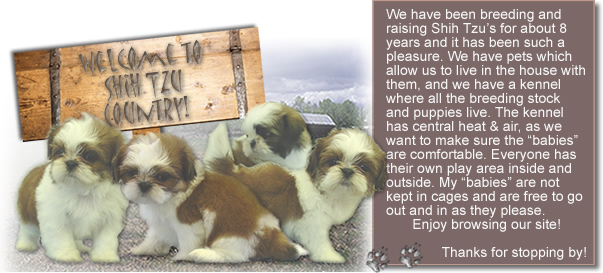 Country Home Shih Tzu - Goldenacresdogs com